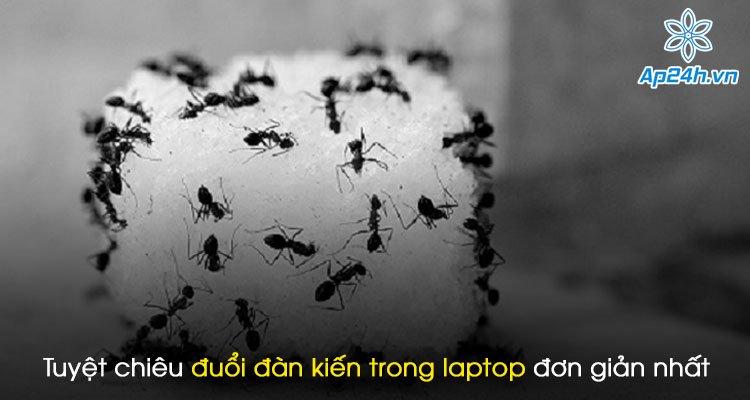 Tuyệt chiêu đuổi đàn kiến trong laptop đơn giản và dễ thực hiện nhất