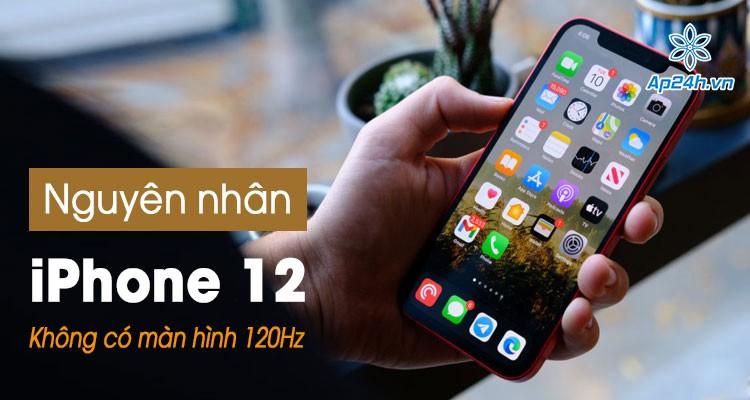 iPhone 12 không có màn hình 120Hz: Nguyên nhân tiềm ẩn tại sao?